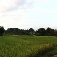 Close to Chiang Mai