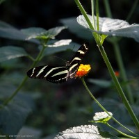 black/yellow butterfly