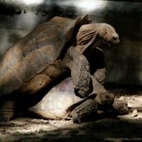 fucking turtles