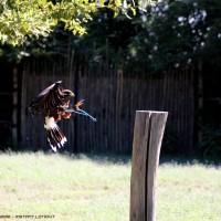 flying raptor .2
