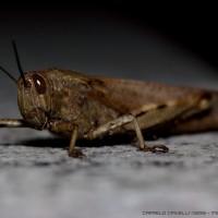 Grasshopper [fev]